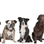 """Pet Business – """"Going to the dogs""""!"""