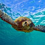 Sea Turtles – ESL Mini Theme