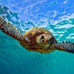 Sea Turtles – ESL Mini Theme